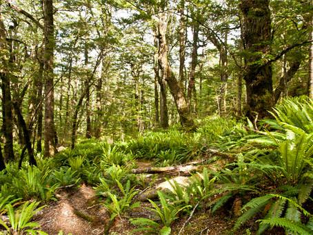 Der Wald - eine Herzensangelegenheit!