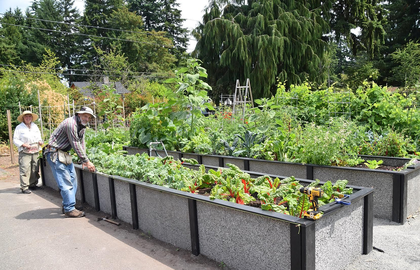 Many P Patches Feature Raised Beds, Which Increase Accessibility.