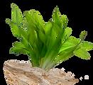 Acquario pianta