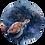 Thumbnail: Schildpad Muurcirkel