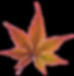 fall leaf d.png