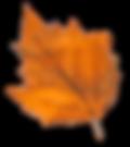fall leaf cc.png