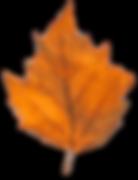 fall leaf b.png