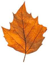 fall leaf b.png