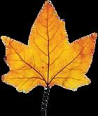 fall leaf a.png