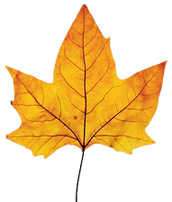 fall leaf a.png