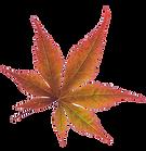 fall leaf bb.png
