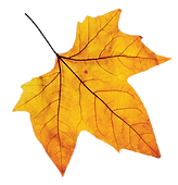 fall leaf dd.png