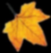 fall leaf dd.png
