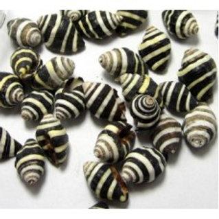 Beehive Shells Set of 3