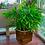 Thumbnail: Vaso Cachepot Planta Jardim C/ Rodas 30x30cm