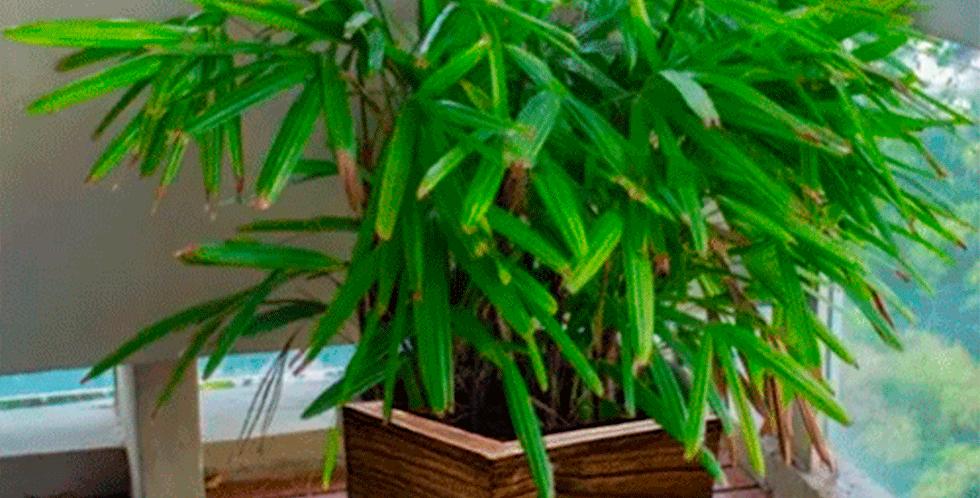 Vaso Cachepot Planta Jardim C/ Rodas 30x30cm
