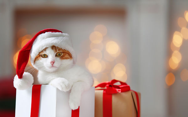 Gift box with cute cat in Santa Claus ha