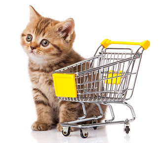 british%20cat%20with%20shopping%20cart%2