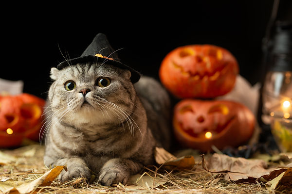 Halloween cat with hat.jpg