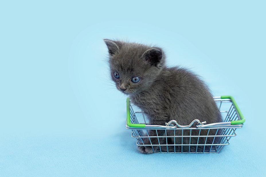 Gray kitten with a shopping basket. shopping for animals. Pet shop, pet Market..jpg