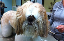 Dog grooming, Brielle, Manasquan, Sea Girt, Point Pleasant, Spring Lake, Belmar, Brick, Wall
