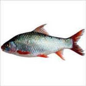 Fish Mrigal