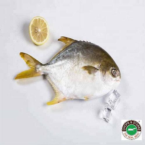 Fish Golden Pomfret