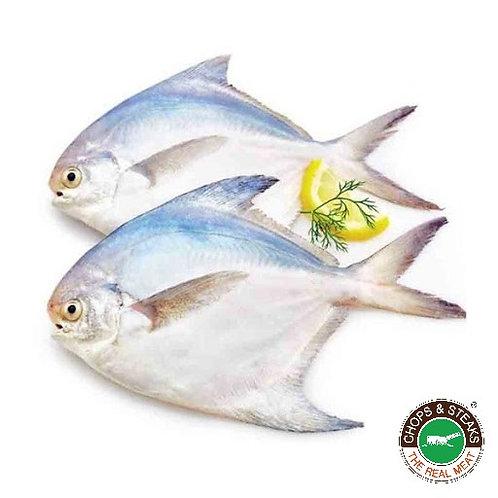 Fish Silver Pomfret