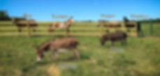 Horses at HFTS.jpg
