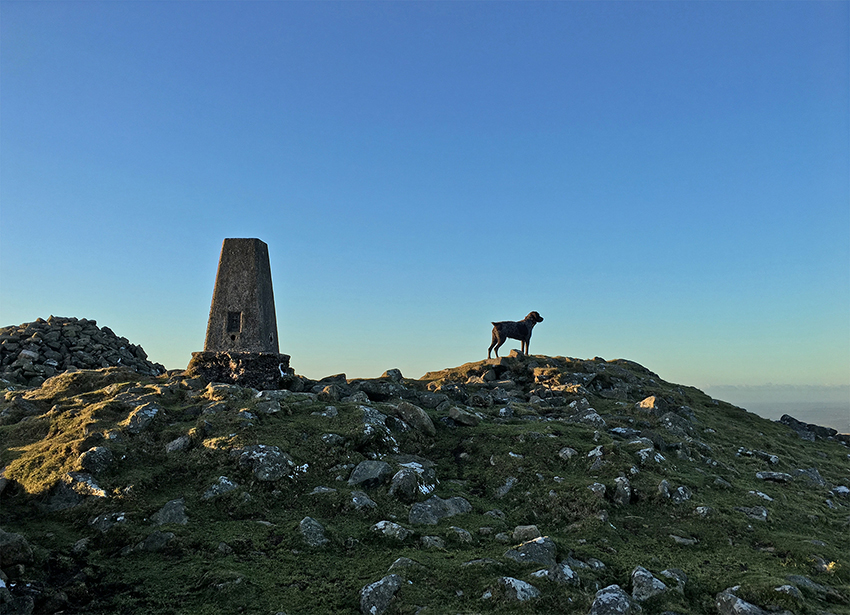 The trig point on the top of Cosdon Beacon.