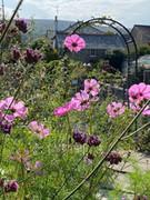 The garden in August.