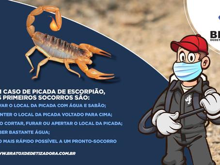 Escorpiões, entenda por que os casos de picadas só aumentam em todo o Brasil.