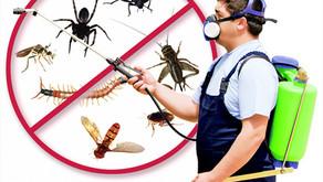 Controle de pragas, uma questão de saúde pública.
