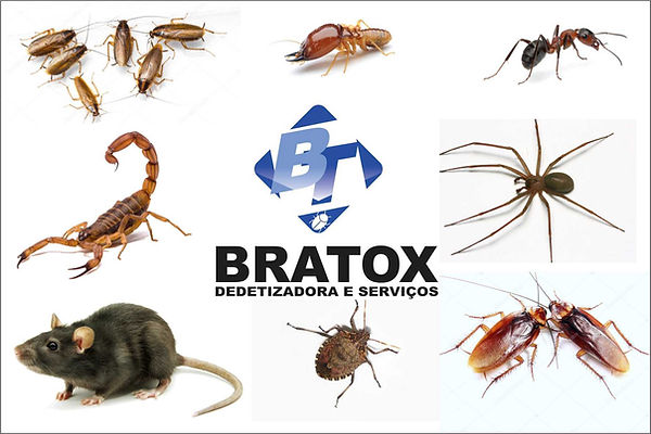 Apresentacao_nova_bratox.jpg