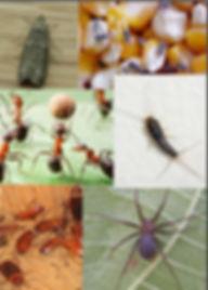 insetos_pragas_editado.jpg