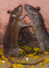 bratox-dedetizadora-dedetizaçao-brasilia-df-foto12.jpg