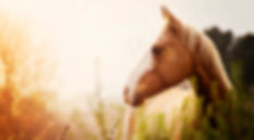 The Horses Gift with Julie Bechu,equine experiential learning