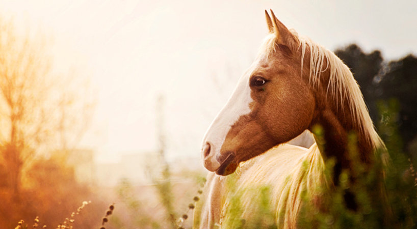 The Horses Gift with Julie Bechu, a pathway to Joy