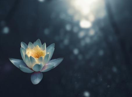 La voie du lotus