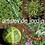 Thumbnail: Artistes de jardin