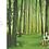 Thumbnail: Une année dans les bois