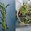 Thumbnail: Mangez la ville - Recettes végétariennes originales à réaliser avec les plantes