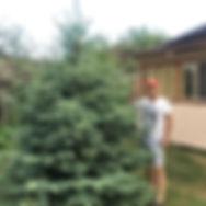 Голубая елка в Удмуртии в 2018 году, пос