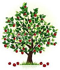 Яблоня .jpg