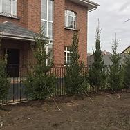 Посадка елок высотой 4,0+ метра в Казани