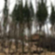 Альм гринспаер 2_edited.jpg