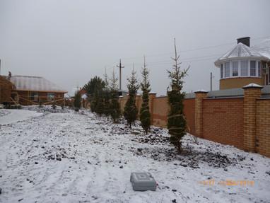 Посадка крупнлмерных елей в г. Набережны