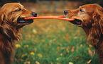משמורת על כלב -עורכת דין גירושין ומשפחה שרונה מאיר בן זאב