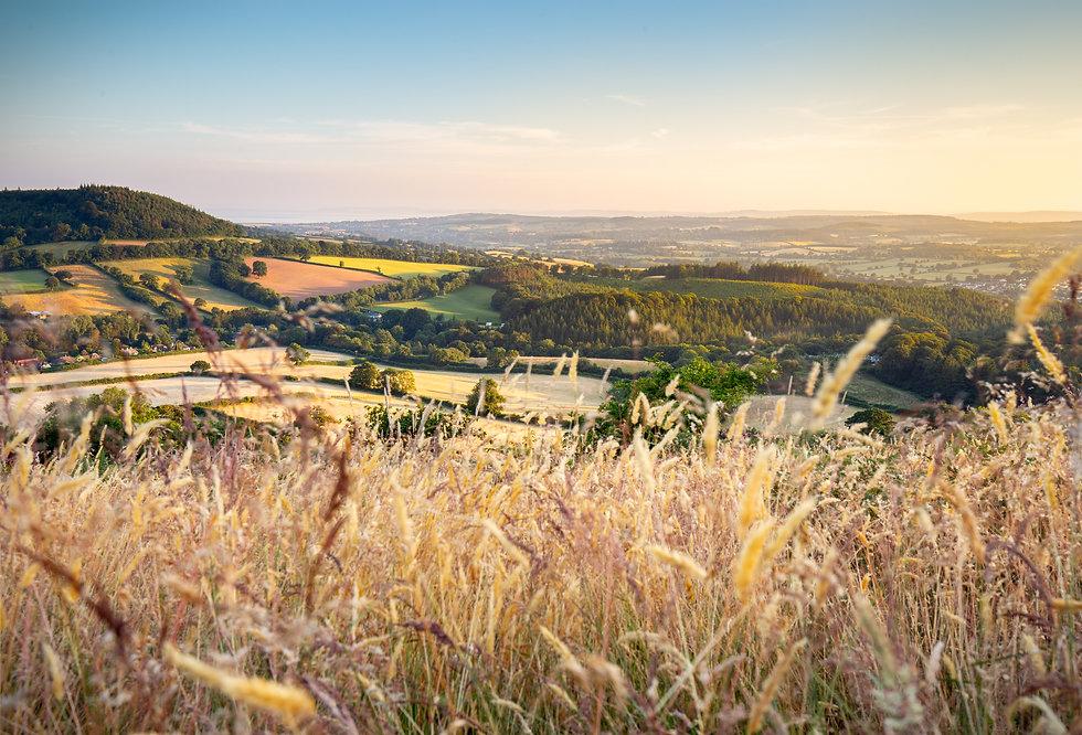 Devon field.jpg