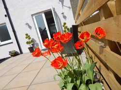 Poppy patio spring