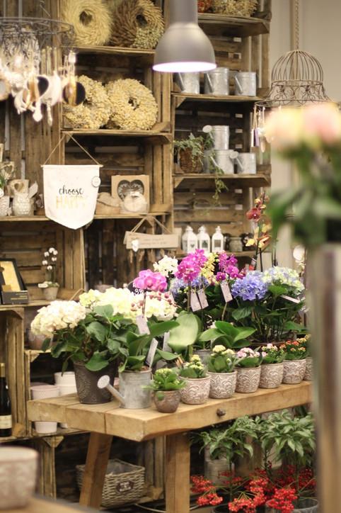 Anemone-Fleur-3775-min.jpg