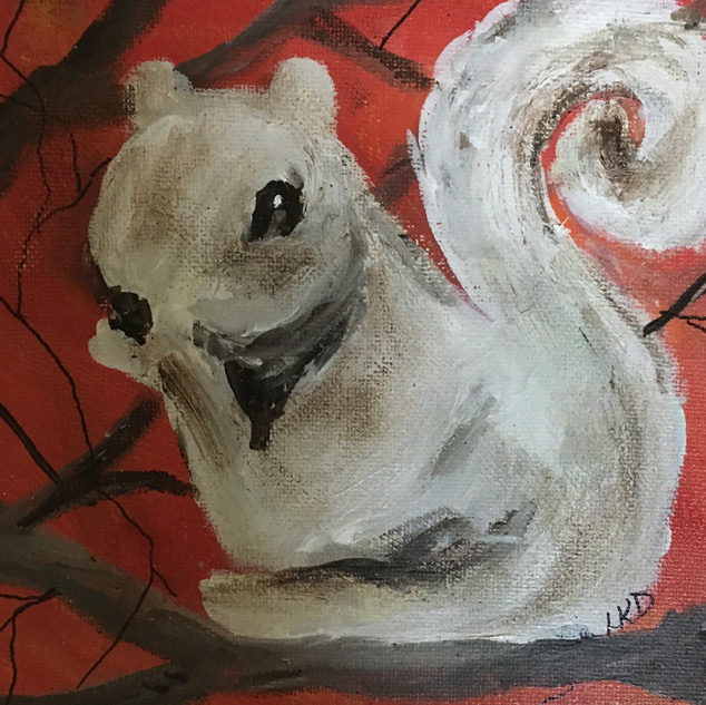 White Squirrel II.JPG.jpg