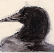 Decoy4, charcoal, 50x62cm, 2012
