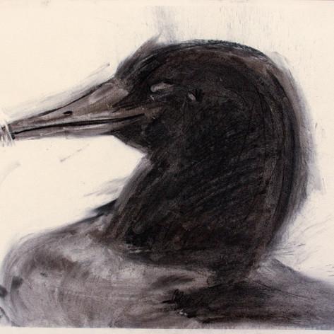 Decoy4, charcoal, 50x62cm, 2012